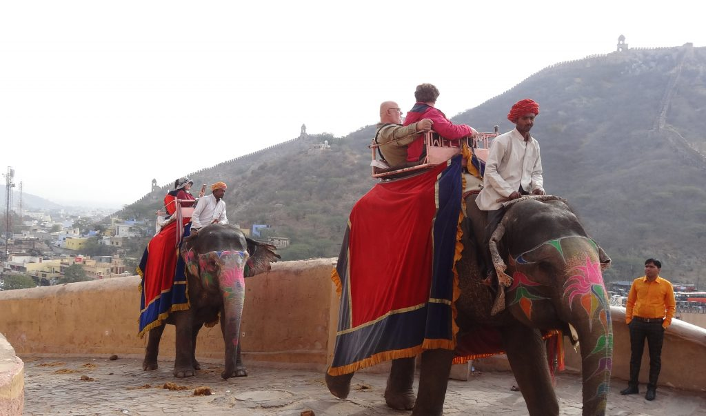 Elephants at Amber Fort in Jaipur