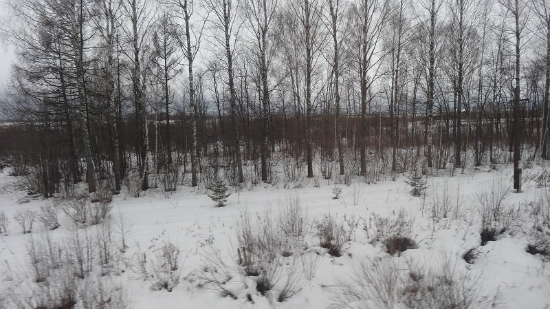 Crossing Siberia by train. Endless snow and lots of trees.