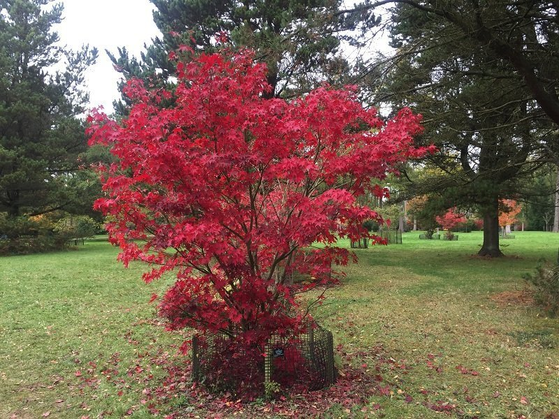 Fabulous colours at Westonbirt Arboretum in autumn