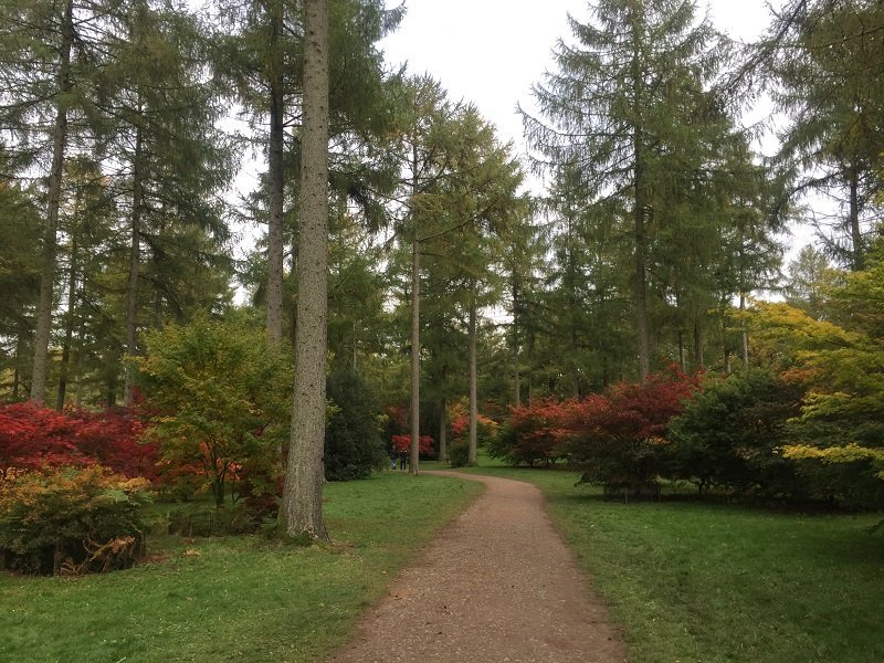 Take a stroll amongst the trees on the Seasonal Trail at Westonbirt Arboretum