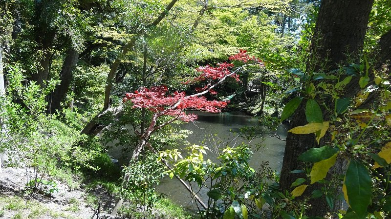 Gardens at  Tsurugaoka Hachimangu Shrine