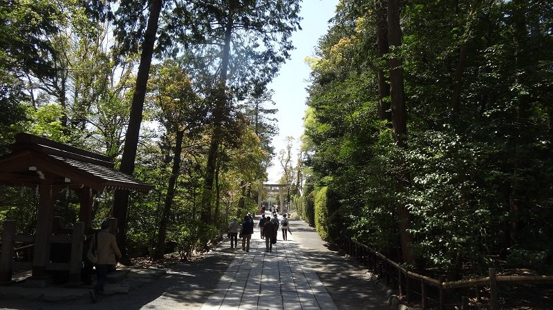 The tree-lined walkway to  Tsurugaoka Hachimangu Shrine