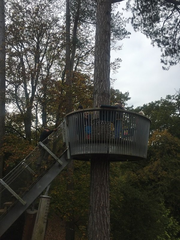 Elevated Lookout Point on the Treetop Walkway