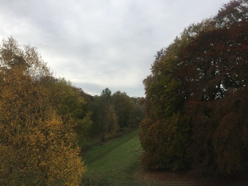 View from the Treetop Walkway
