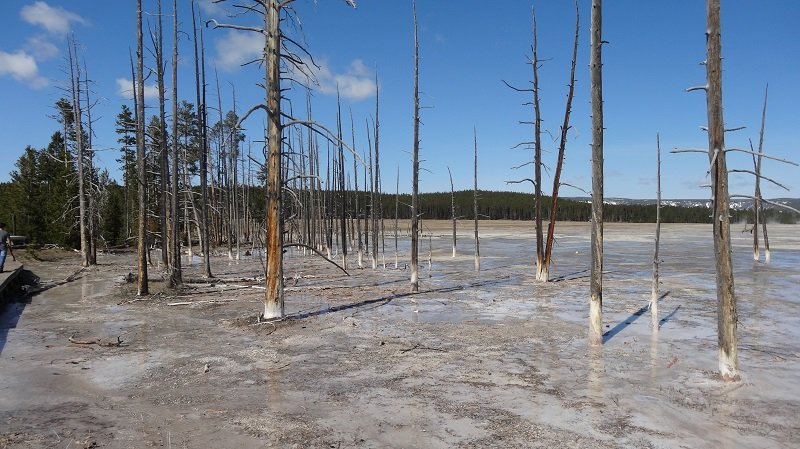 Surreal landscape at Yellowstone NP