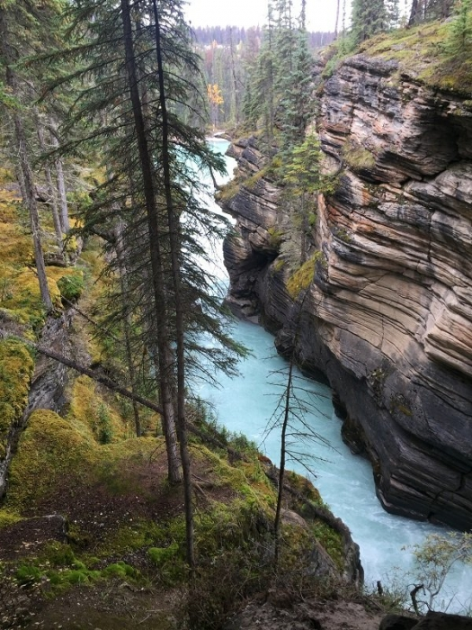The gorge at Athabasca Falls