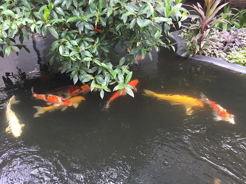 Where to stay in Bangkok. The Koi Pond at the Anjarak Hotel